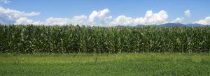 Header - Agribusiness